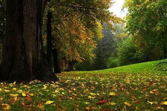 秋季如何预防牛皮癣复发?
